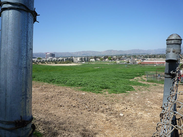 pierce college fields 021