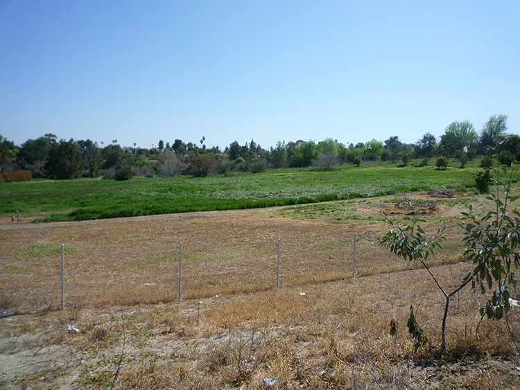 pierce college fields 027