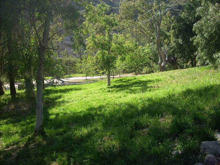 trees&grassyarea